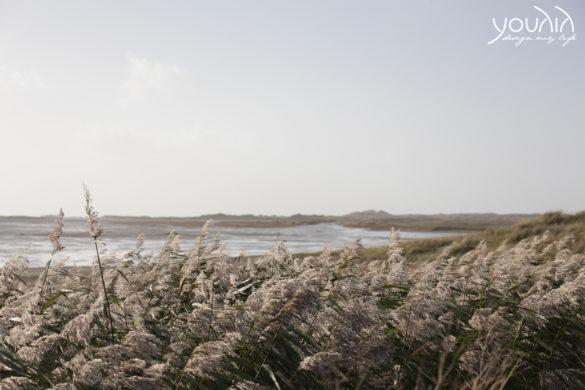 Terschelling Wattenmeer