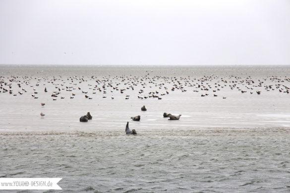 Robben auf einer Sandbank | www.youdid-design.de