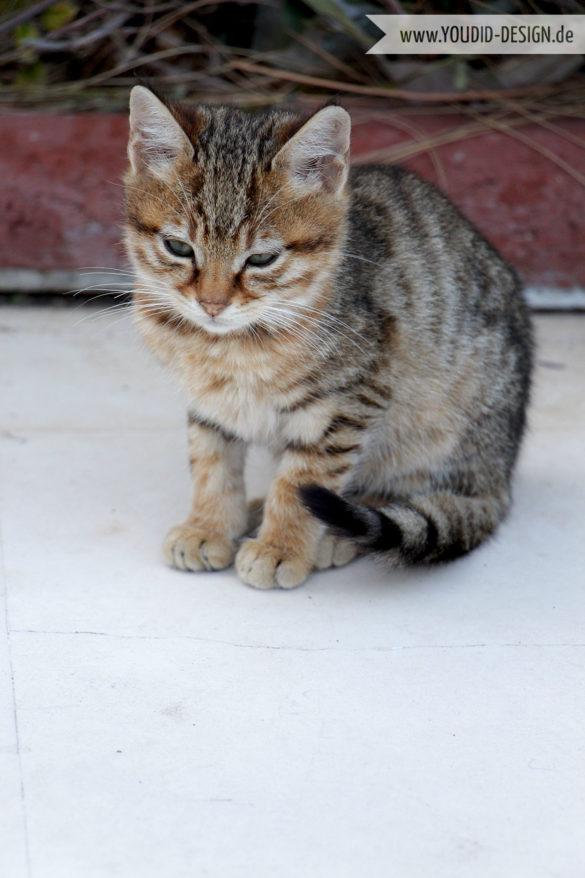 Katzen Türkei | youdid-design.de