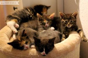 5 süße Kitten | www.youdid-design.de