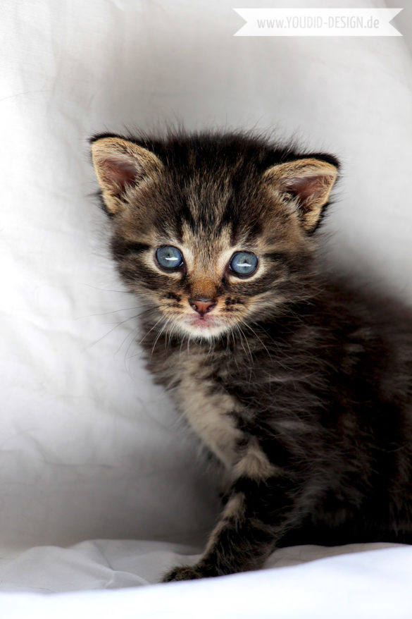 Fotoshooting Katzenbaby | www.youdid-design.de