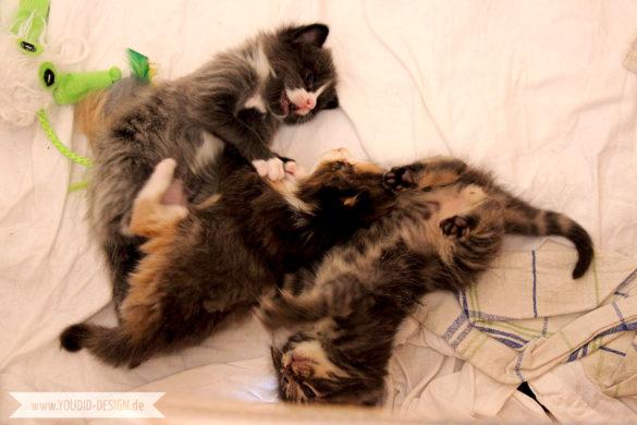Katzenbabies raufen | www.youdid-design.de