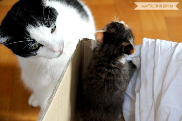 Kitten Ausbruch | www.youdid-design.de