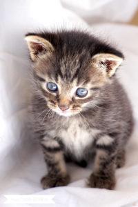 Main Coon Mix Kitten | www.youdid-design.de