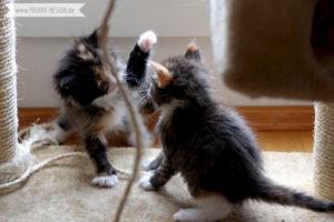 Schwestern kämpfen Katzenbabys   www.youdid-design.de