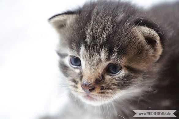 getigertes Katzenbaby 3 Wochen alt | www.youdid-design.de