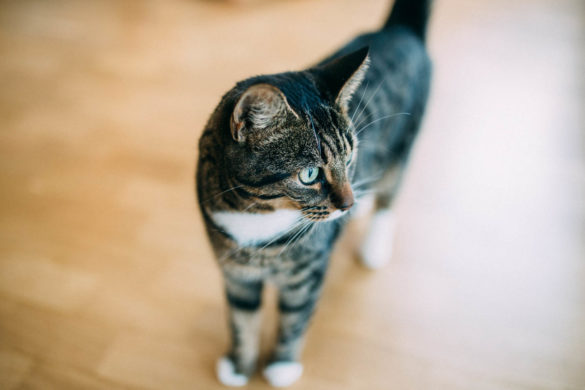 getigerte Katze | https://youdid.blog