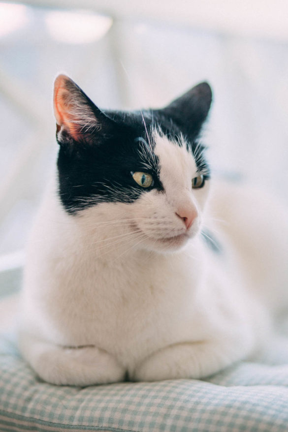 schwarz weisse Katze black and white cat | https://youdid.blog
