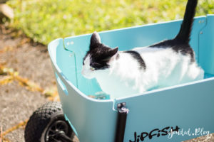 Stylischer Handwagen statt Geschwisterwagen Katze im Bollerwagen | https://youdid.blog