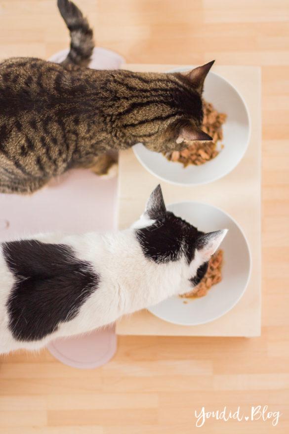 Bauanleitung DIY Katzennapf im skandinavischen Stil - Fressnapf Futternapf Katzenbar für Interiorlover - DIY pet bowl | https://youdid.blog