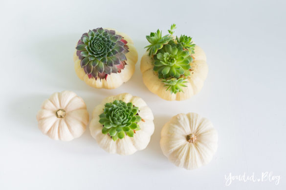Minimalistische Herbstdeko Baby Boo Kürbisse mit Sukkulenten bepflanzen Sukkulente Tischdeko - autumn decor white pumpkin with succulents table decoration | https://youdid.blog