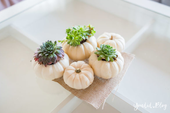 Minimalistische Herbstdeko Baby Boo Kürbisse mit Sukkulenten bepflanzen Sukkulente Tischdeko - minimalistic autumn decor white pumpkin with succulents decoration | https://youdid.blog