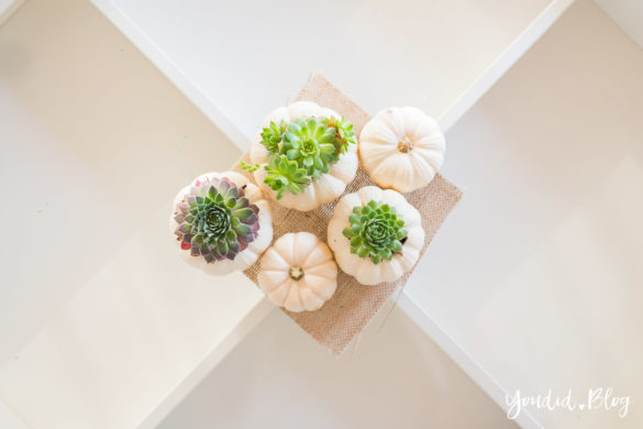 Minimalistische Herbstdeko Baby Boo Kürbisse mit Sukkulenten bepflanzen Sukkulente Tischdeko - minimalistic autumn white pumpkin with succulents table decoration | https://youdid.blog