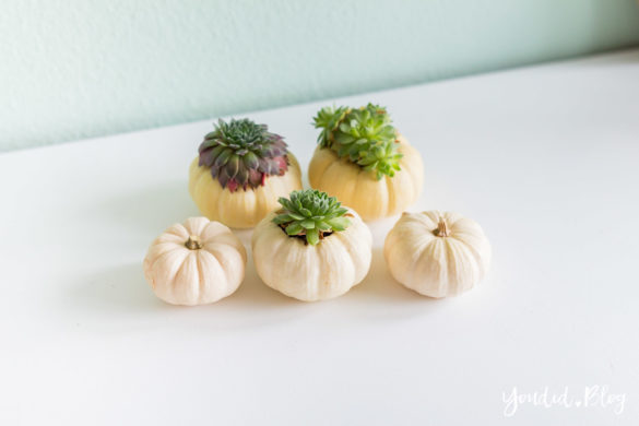 Minimalistische Herbstdeko Baby Boo Kürbisse mit Sukkulenten bepflanzen Sukkulente Tischdeko - minimalistic white pumpkin with succulents table decoration autumn decor | https://youdid.blog
