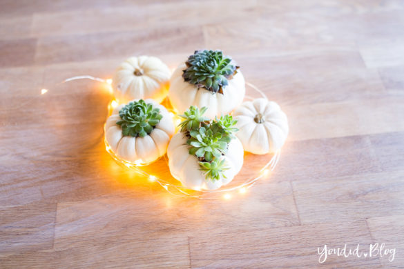 Minimalistische Herbstdeko Baby Boo Kürbisse mit Sukkulenten bepflanzen Tischdeko - minimalistic autumn decor white pumpkin with succulents table decoration | https://youdid.blog